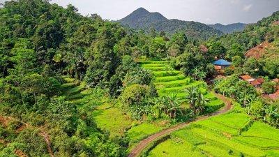Restauración de ecosistemas tropicales